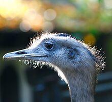 Ostrich by IYL86