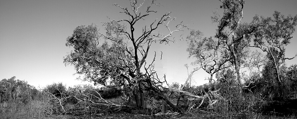 Treescape v by christopher  bailey