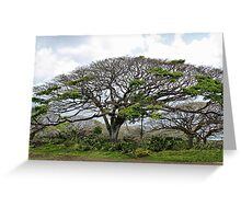 Monkey Pod Tree Greeting Card