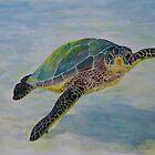 Green Sea Turtle by Paul Gilbert