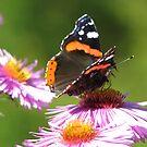 Colorful wings by Elena Skvortsova