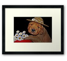 Silly Sweet Framed Print