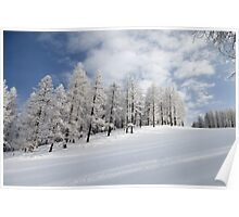 Tree lined piste Poster