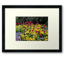 Tulips On Display Framed Print