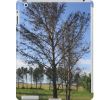 Old trees iPad Case/Skin