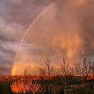 Rainbow by Teresa Zieba