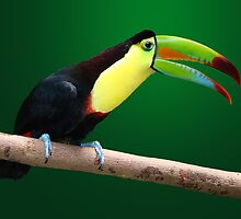 TOUCAN 3 by Michael Sheridan