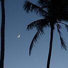 Palms at Night by Lucy Hollis
