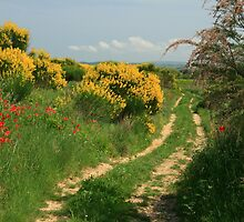 Country path southern France by Paul Pasco