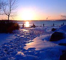 Lavender Cold at Sunrise by murrstevens