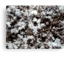 Snow on Bush Canvas Print