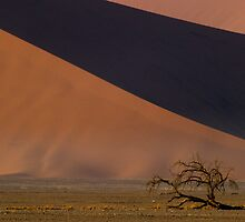 Dwarfed by Dunes - Namibia by Lisa Germany