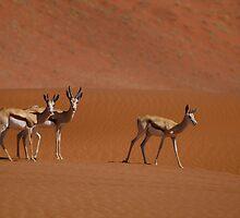 Springbok - Namibia by Lisa Germany