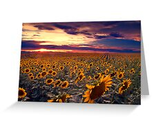 Sunflowers and Colorado Sunsets  Greeting Card