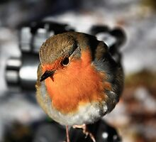 Rogie Robin by Rob Outram