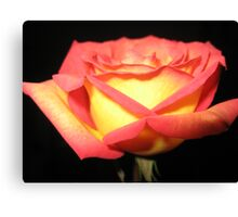 TWO TONE ROSE Canvas Print