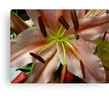 Lilly Oil Canvas Print