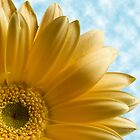 Bright Sunshine Day by kkgivens