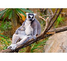 Lemur: give me more beer and a tv remote!!! Photographic Print