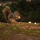 chipmunk in forest by Gale Distler