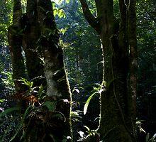 Tree by BengLim