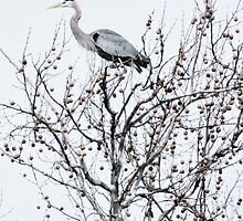heron in high key by g richard anderson