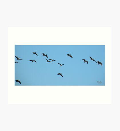 'Just Geese' Art Print