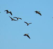 'Just Geese' by Scott Bricker