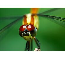 Insectopia by Jules Campbell Photographic Print