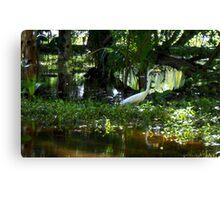 Great White Crane (Samana) Canvas Print