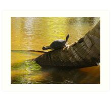 Pond Turtle Clapping Her Feet ?  (Samana) Art Print