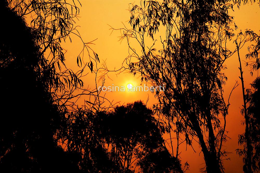 Sunset 2nite by Rosina  Lamberti