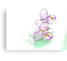 Orchid, beauty flowers Canvas Print