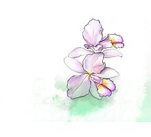 Orchid, beauty flowers Photographic Print