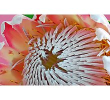 King Protea centre detail Photographic Print