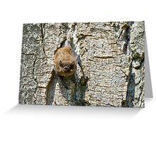 Pipistrello, Lago Chiusi, Toscana, Italia Greeting Card