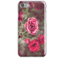 Late Summer Roses iPhone Case/Skin