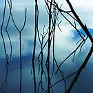 Reflections by Dawn Ostendorf