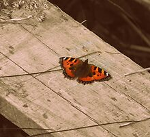 Butterfly !! by Anita  Fletcher