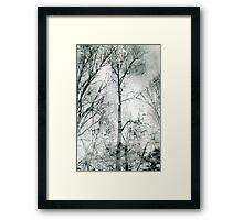 bare trees  #1 Framed Print