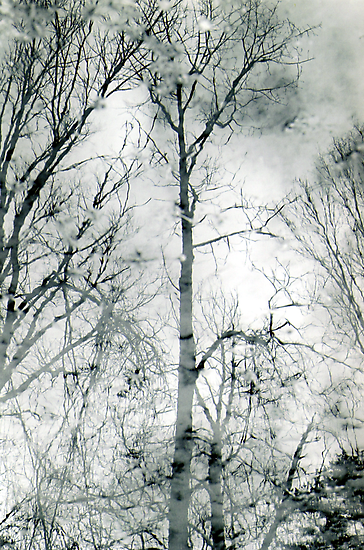 bare trees  #1 by butchart