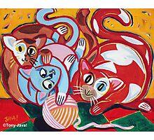 'Kitties at Play' Photographic Print
