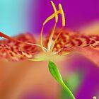 Tiny Dancer by Renee Hubbard Fine Art Photography