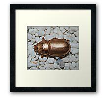 Golden bug Framed Print