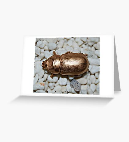 Golden bug Greeting Card