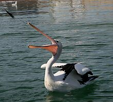 Pelican Catching Thrown Fish by Jenny Brice