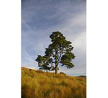 Last Tree of Alba Photographic Print