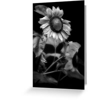 Sunflower Without Sun Greeting Card