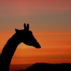 Giraffe at Sunset by Jenny Brice