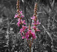 Pink Flower by SherlockReader1